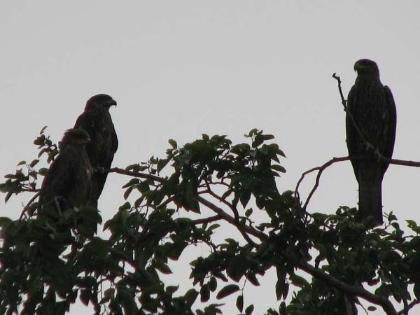 Meeting of birds by Prashant1610