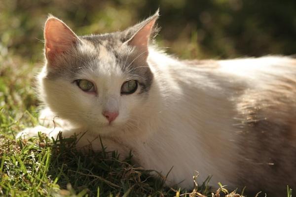 CAT by NATARAJAN
