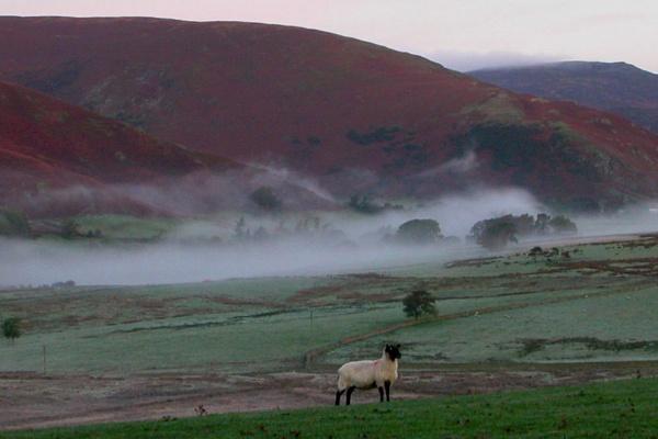 Misty Morning outside Keswick by rogerstaten
