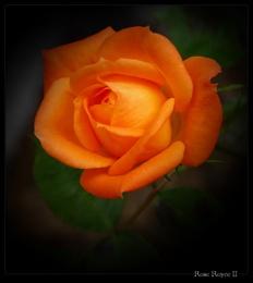 Rose Royce II