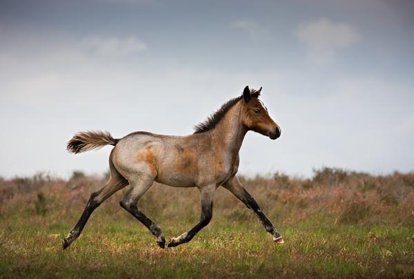 The Proud Foal