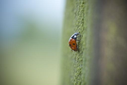 Ladybird by Moey