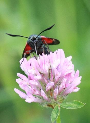 Ah Nectar! by avocet