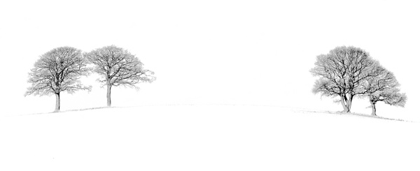 Winter trees by ensign