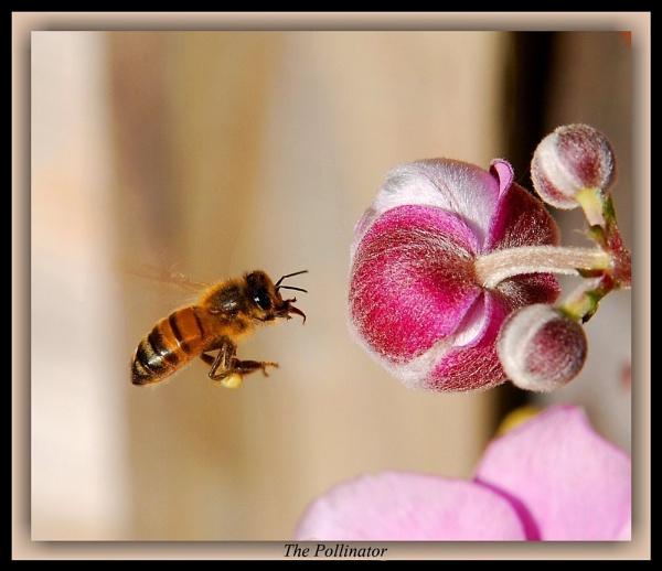 The Pollinator by Delbon