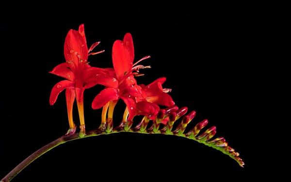 Flowering by Dado