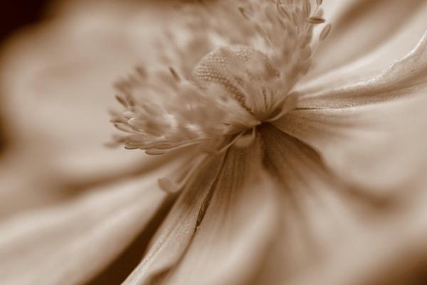 Sepia by EventHorizon
