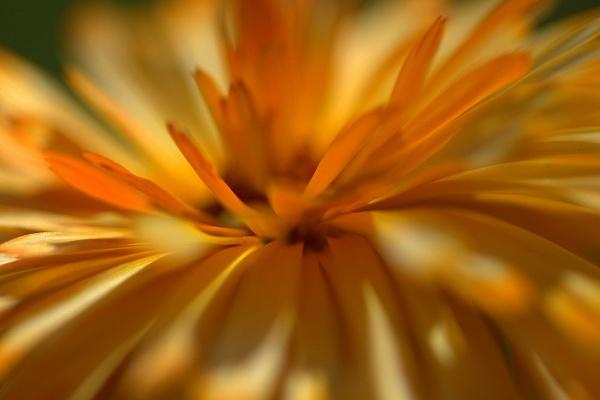 Orangey by EventHorizon