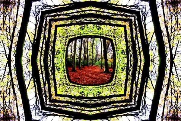 Framed Woodland by Ian55