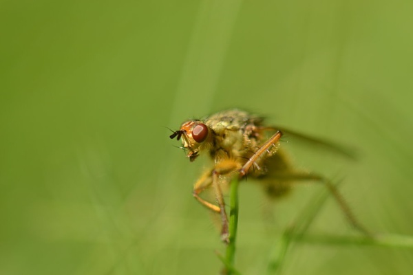 Fly macro by colinbear
