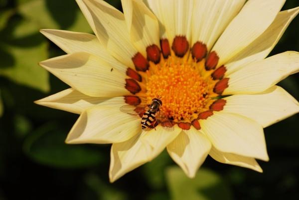 Petite Fleur... by Chinga