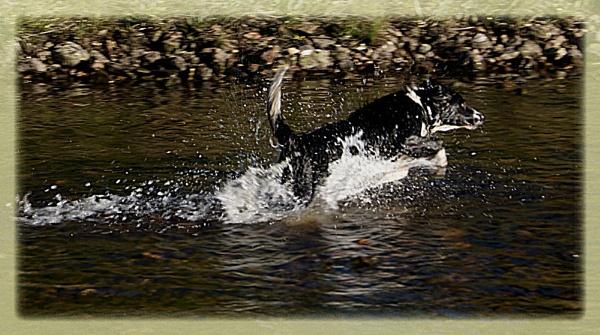 Fetch by ciara25