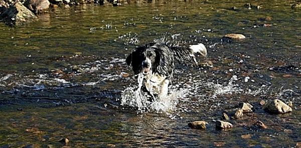 splash 2 by ciara25