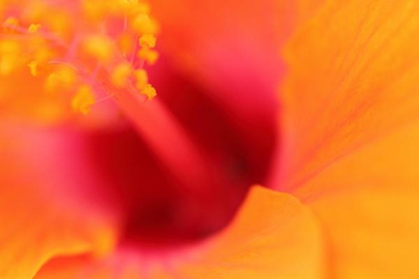 Thai Flower 2 by Premnay_Matt