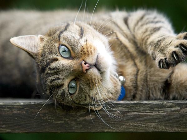 Cat by victorburnside