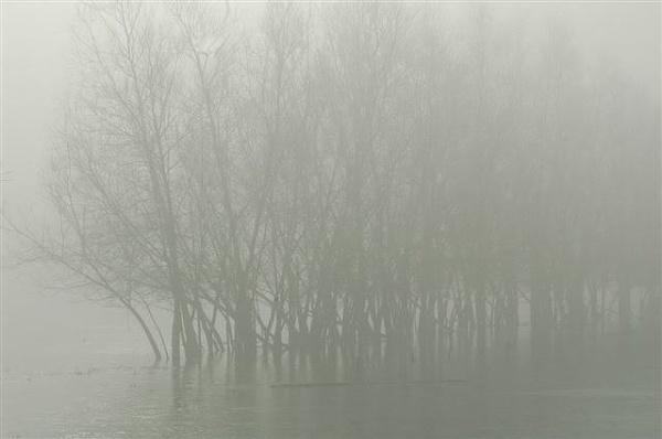 Misty by realspeed