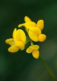 Wild and yellow