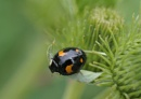 Ladybird by whiteswan01