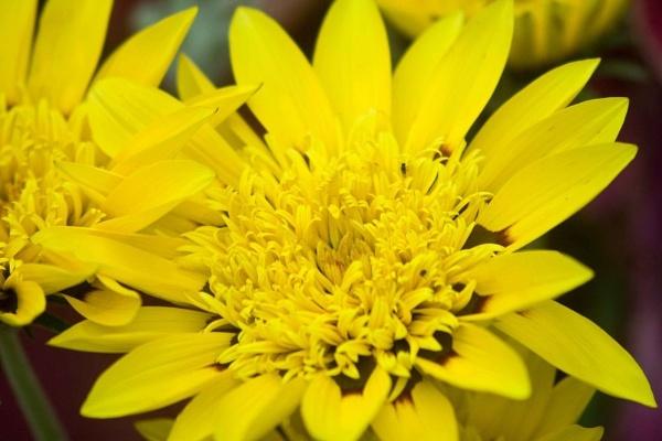 A splash of yellow by rambler