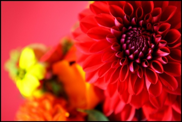 Floral Magic by In-Focus-Imaging