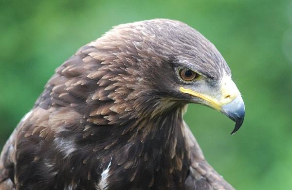 Birds of prey by brownbear