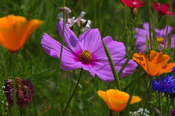 Wild Flowers by EventHorizon