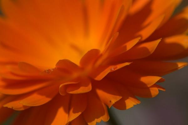 Burst of petals by EventHorizon