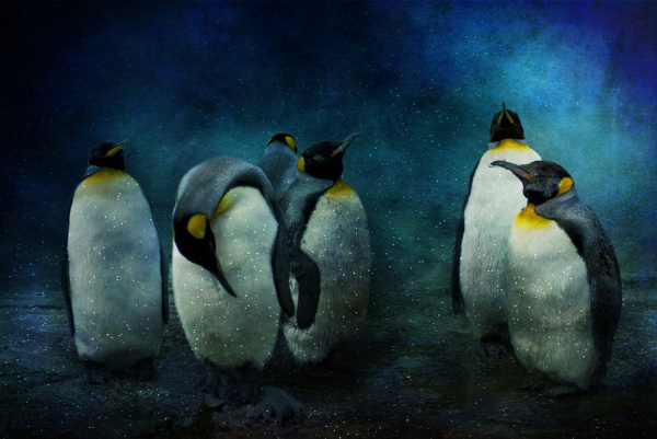 Cold Penguins by Audran