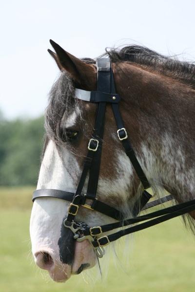 Digger Rescue Horse by sedonamoonshine