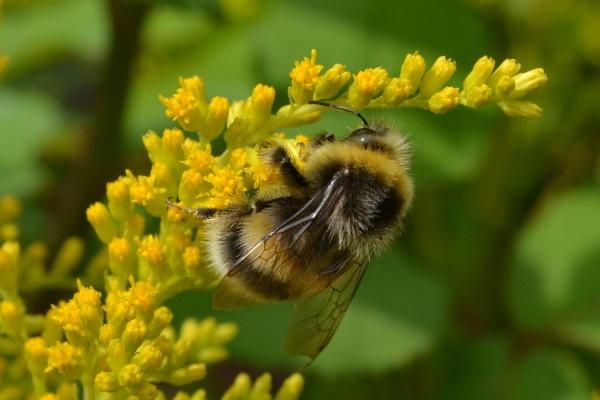 Bee by greenie