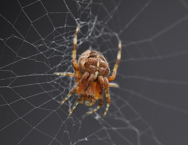 Itsy Bitsy Spider....... by Dilys