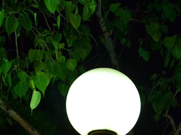 Lamp Light by Prashant1610