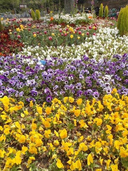 Flower bed by schulmanjb