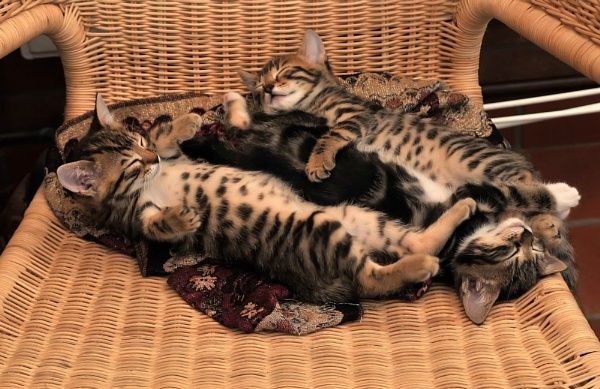 Cat nap by faulknerstv