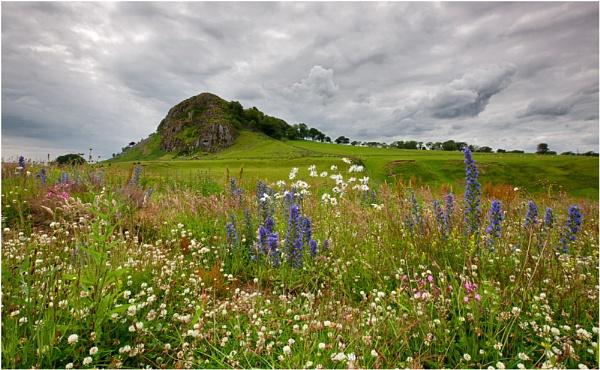 Wildflower Garden... by Scottishlandscapes