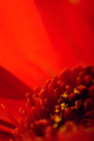 Pretty in Red by TamJ