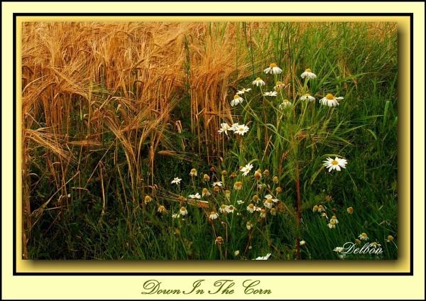 Down In The Corn by Delbon