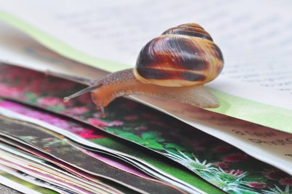 Snail fooled by a magazine! by Lynx08