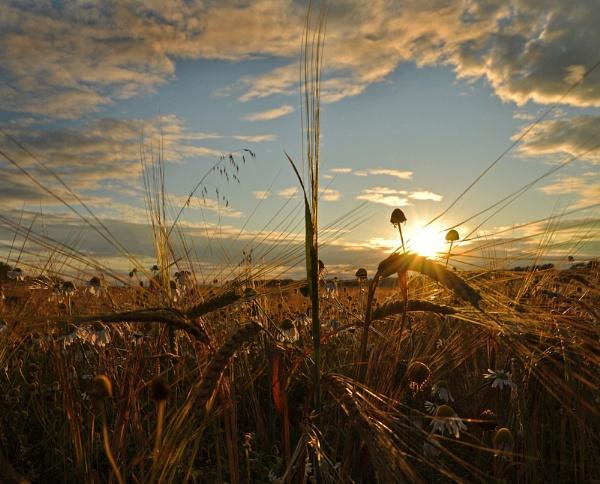 field of dreams by andylea