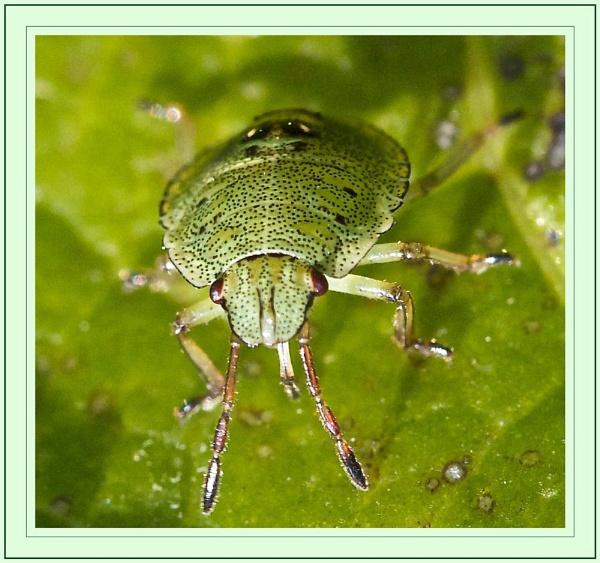 Stink Bug? by mjparmy