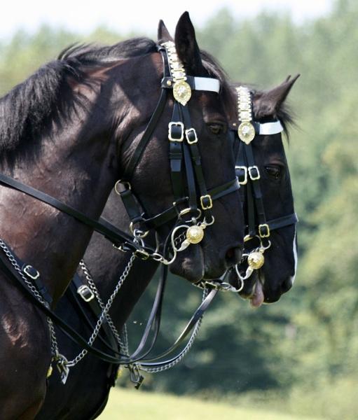 World Horse Welfare Event at Snetterton by sedonamoonshine