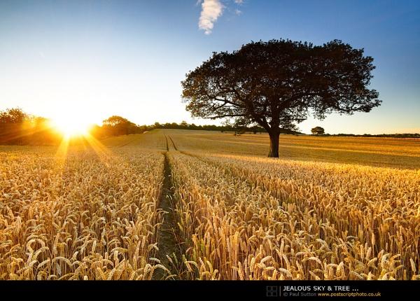 Jealous Sky & Tree ... by sut68