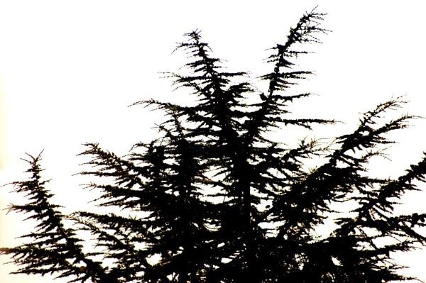 Tree by Redten10