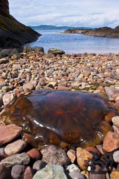 Jellyfish - Portencross, Ayrshire by AndyBeattie