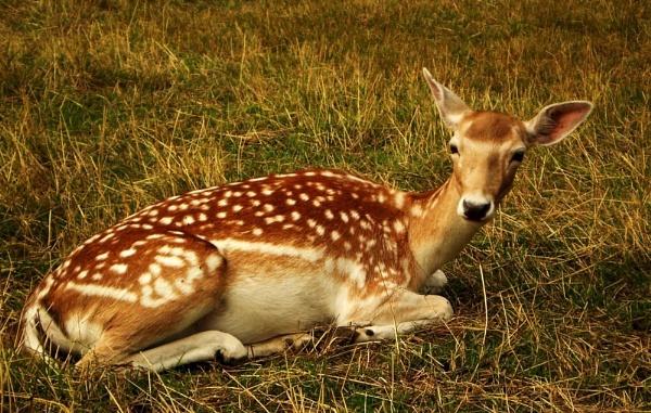 Oh my Deer! So dear! by Chinga