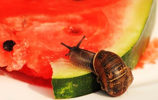 Fruity! by Chinga