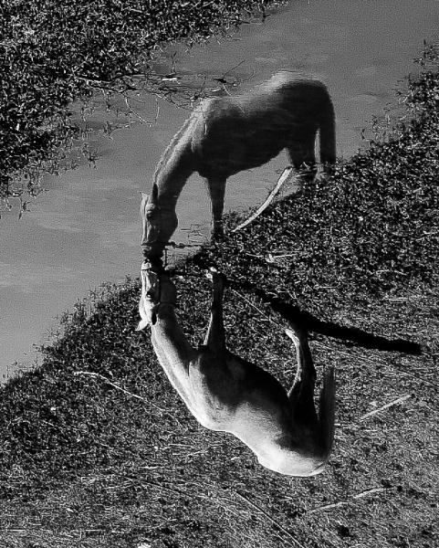 Horses by DitoInacio
