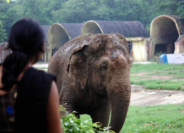 jungle Raja by manashi