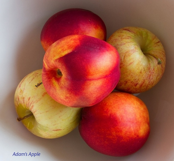 Adam\'s Apple by toewrag