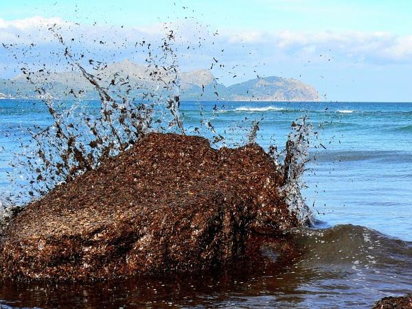 Seaweed Rock Splash by stychy